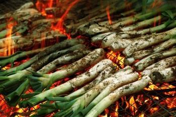 Calçots and calçotades, a gastronomic phenomenon